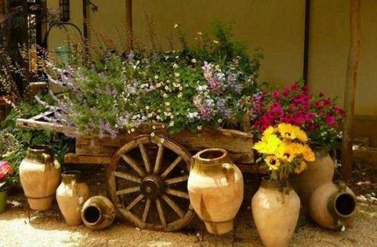 Plantas Ideais para Jardins flores estação cores