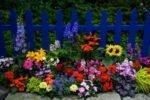 Plantas Ideais para Jardins plantar jardinagem casa cores